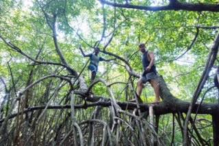 Bentota, lagoon, mango trees, Sri Lanka