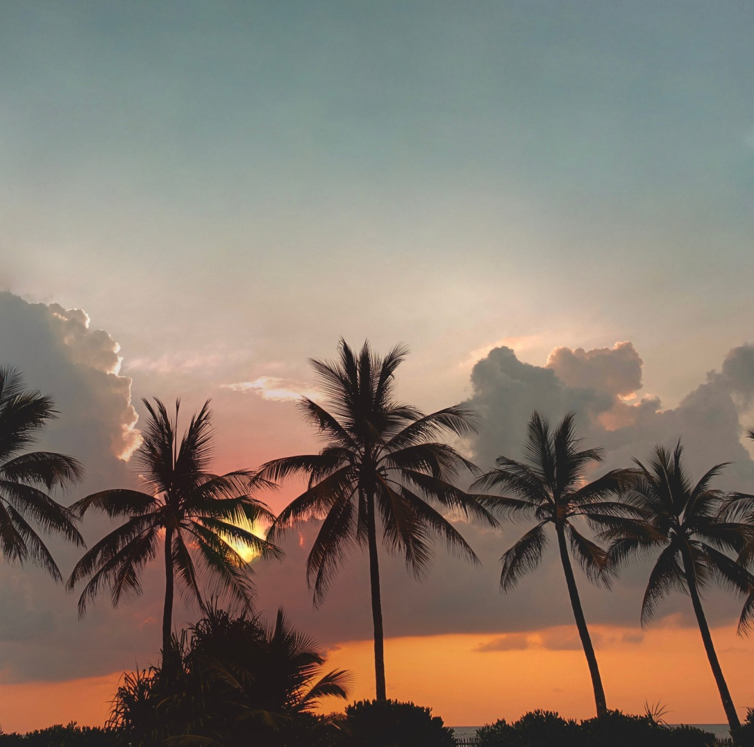 palm trees in the sunset ella sri lanka travel