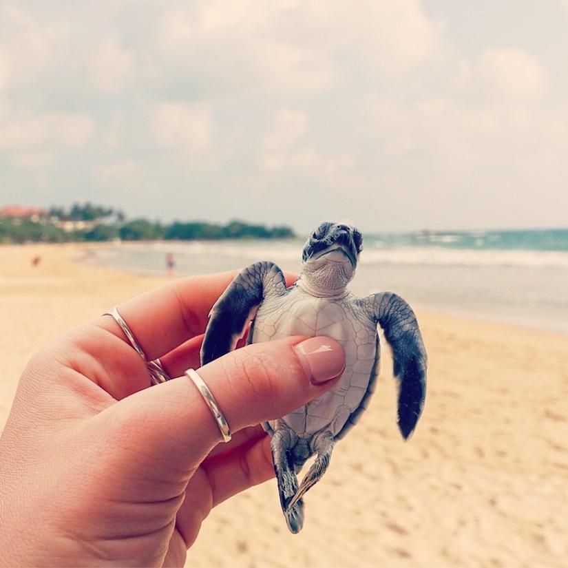 turtle hatchery, Baby Turtle, Bentota, Sri Lanka, Cute,