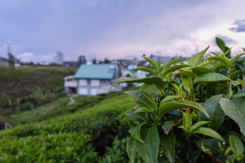 Numara Eliya, Sri Lanka, Hotel, Guest House, Top 5, Tea