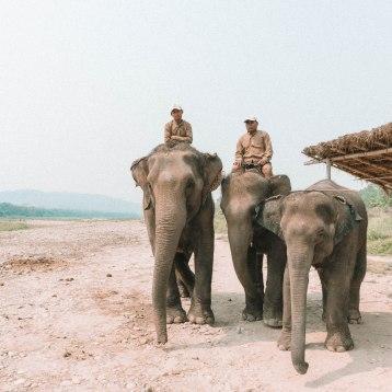 Chitwan National Park, Barahi Jungle Lodge, Nepal, Bath time, Wash
