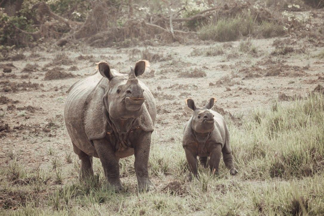 Chitwan National Park, Nepal, Rhino, Baby