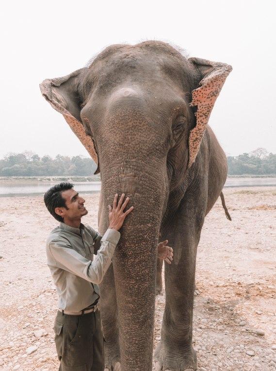 Naturist with Elephants, Chitwan National Park, Nepal, Bathing, Wild, Elephant