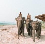 Elephant Party