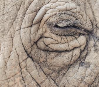 Elephant, Eye, Nepal, Chitwan National Park, Wildlife