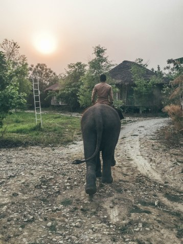 Riding, Elephants, Nepal, Jungle, Chitwan, Naturist