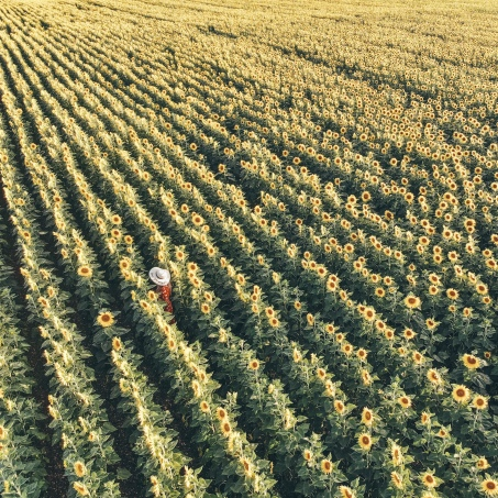 Sunflower, Field, DJI, Drone, France, Limalonges, Salt and Coconuts