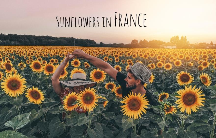 France, Limalonges, Travel, Sunflowers, Beautiful, couple, goals,