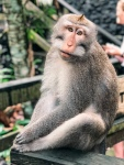 Monkeys, Temples, Ubud, Bali, Travel Guide