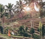Salt and Coconuts, Rice Terraces, Bali, Ubud, Travel Guide, Nature, Top recommendations, Sarah Lias
