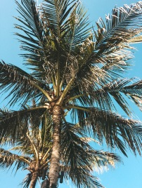 Salt and Coconuts, Bali, Travel Guide, Palm Trees, Beauty, Summer, Hipster vibes, Find Louis, Sarah Lias